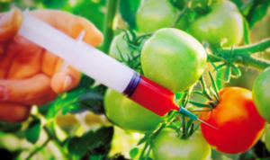 аллергия появляется из-за употребления генномодифицированных продуктов