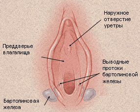 Лечение бартолиновой кисты